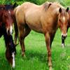 Jigsaw: Horses