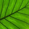 Jigsaw: Leaf Detail