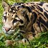 Jigsaw: Little Leopard
