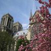 Jigsaw: Notre Dame Flowers