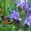 Jigsaw: Pollinating