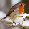Jigsaw: Robin In Winter