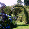 Jigsaw: Rose Arch