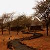 Jigsaw: Safari Camp