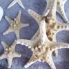 Jigsaw: Sea Stars