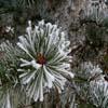 Jigsaw: Snowtree