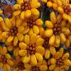 Jigsaw: Sulmona Flowers