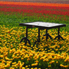 Jigsaw: Table In Tulip Field