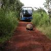 Jigsaw: Tortoise Road