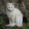 Jigsaw: White Cat