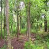 Jigsaw: Woods