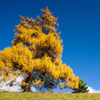 Jigsaw: Yellow Tree