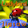 Ladybird Jigsaw