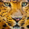 Leopard Jigsaw