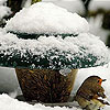 Little bird and snow puzzle