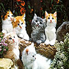 Lovely cats slide puzzle