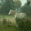 Magic Horse Jigsaw