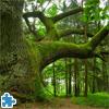 Mighty Oak Jigsaw