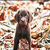 Minuscule dog slide puzzle