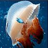 Mosaic jellyfish slide puzzle