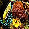 Ocean best  fish puzzle