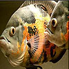 Ocean fish slide puzzle