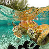 Ocean turtles slide puzzle