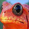Orange frog slide puzzle
