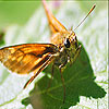 Orange winged butterfly slide puzzle