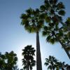 Palm Trees Jigsaw