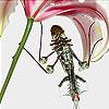 Parachutist grasshopper slide puzzle