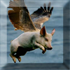 PigFly