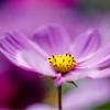 Pink flower jigsaw