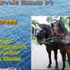 Puzzle Mania v2 – Horses