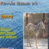 Puzzle Mania v2 – Zebra