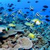 Reef Fish Puzzle