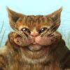 River Cat