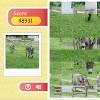 Row Puzzle – Donkey