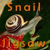 Snail Jigsaw