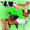 Sounds – part 1. Sounds of pets / Звуки. Звуки домашних животных