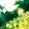 Spring Glow Jigsaw