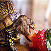 Strawberry and turtle slide puzzle