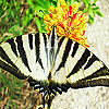 Striped butterfly slide puzzle
