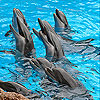 Sweet dolphins slide puzzle