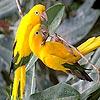 Sweet parrots slide puzzle