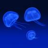 The inhabitants of the seas