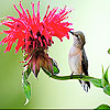 The tiny bird and flower slide puzzle
