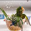 Thirsty little bird slide puzzle