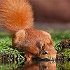 Thirsty squirrel puzzle