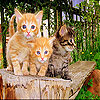 Three funky cat slide puzzle